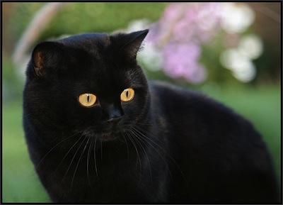 Mitos-del-Gato-Negro